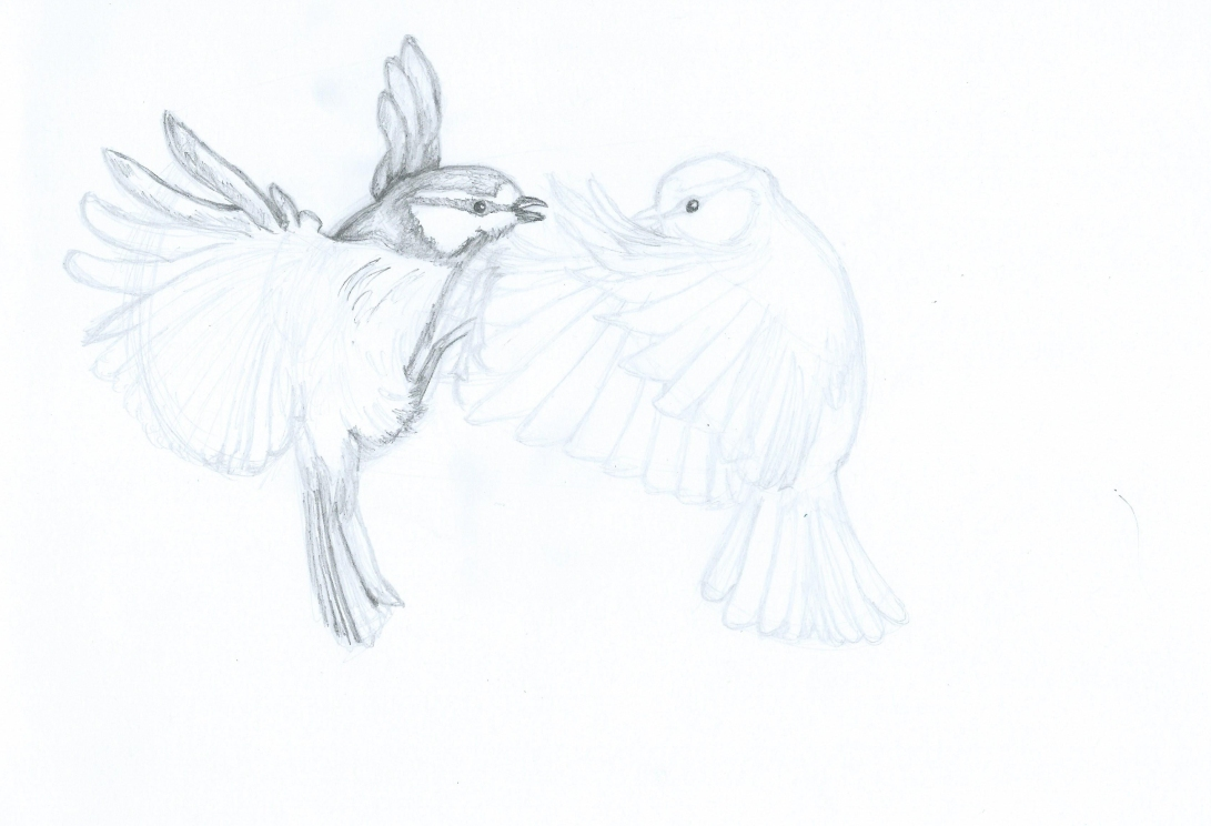 Blue tits drawing